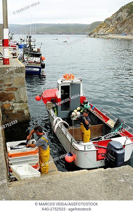 Artisan Fishers unloading their conger daily capture. Malpica de Bergantiños, Galicia, Spain