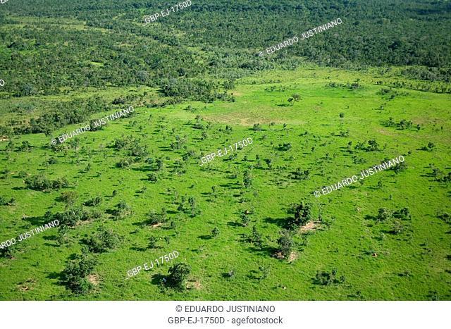 Area of Pasture with Trees, Aquidauana, Mato Grosso do Sul, Brazil
