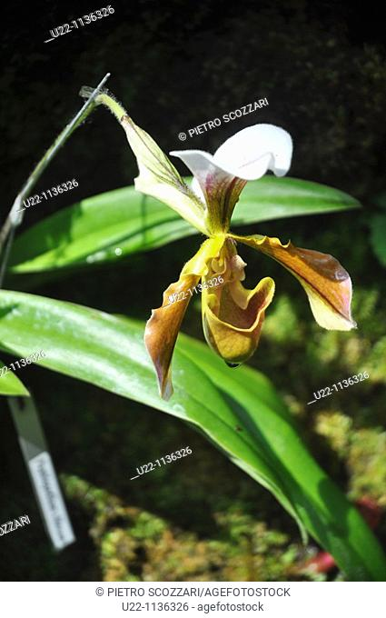 Singapore: orchid at the Botanic Gardens
