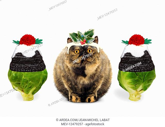 Christmas Pudding Cat with brussel sprouts wearing