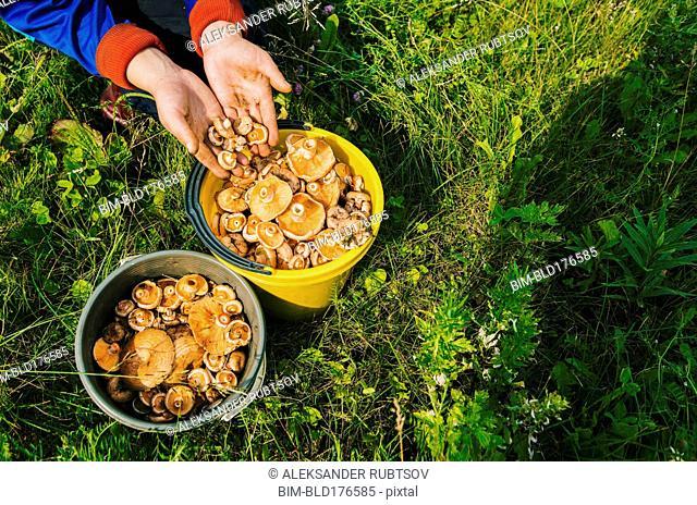 Gardener gathering mushrooms in bucket