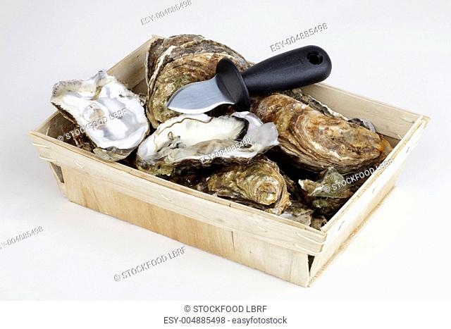 Fresh oyster in a wooden basket with a knife