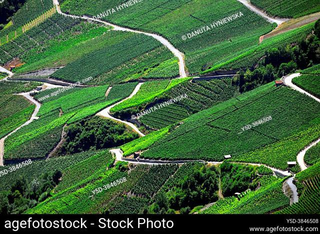 Vineyards on terraces, Summer - July, Rhone Valley, Fendant Wine Region near Sion, Bernese Alps, Valais canton, Wallis canton, Switzerland, Europe