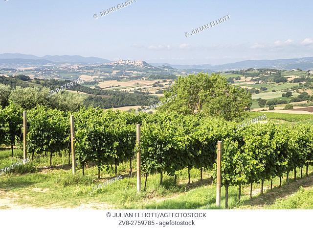 Vineyards near to Todi, Umbria