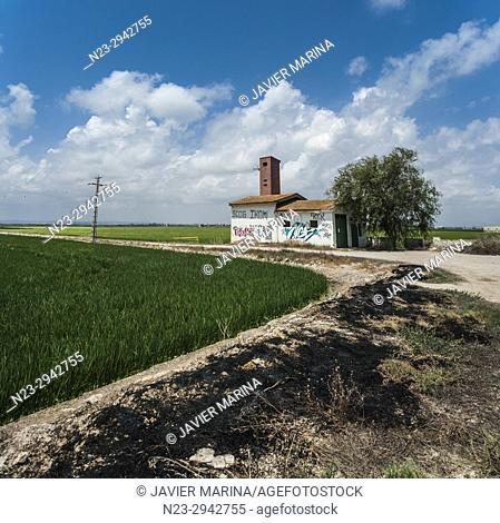 Rice field in the Albufera, Valencia, Spain
