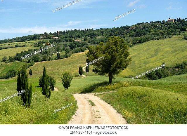 Landscape with Italian cypress trees (Cupressus sempervirens) and gravel road in the Val d'Orcia near Pienza in Tuscany, Italy