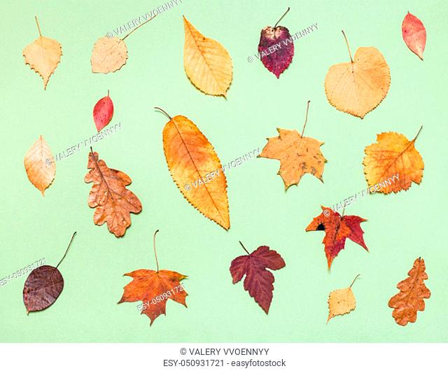top view of various dried autumn fallen leaves on light green pastel paper background