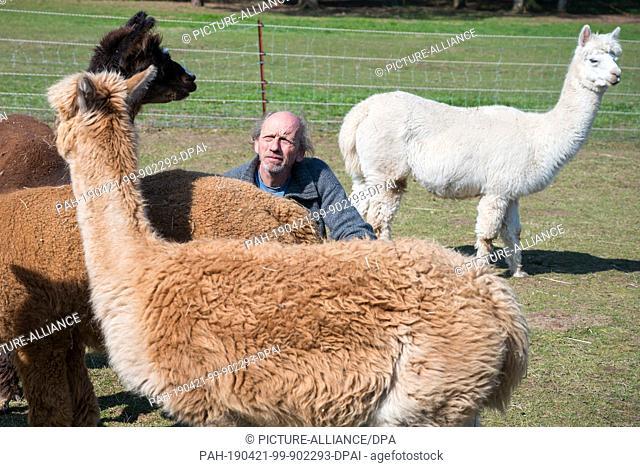 15 April 2019, Saarland, Saarbrücken: Rainer Frenkel kneels between alpacas on the pasture. At the alpaca farm in Saarbrücken