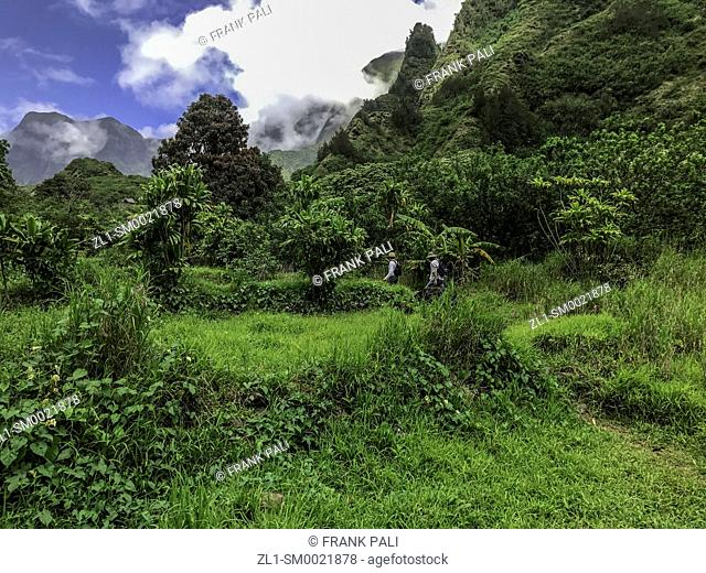 Rainforest and steep mountains, Iao Valley State Park, Maui, Hawaii