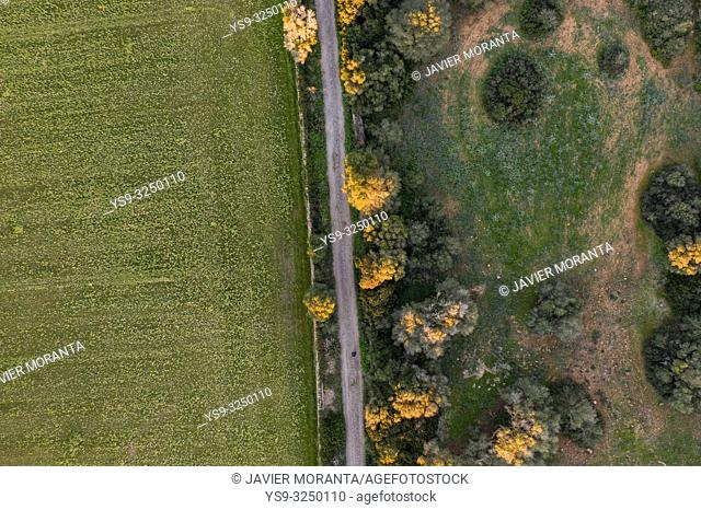 Aerial view of a rural road, Balearic Islands, Spain, Mallorca, Llucmajor