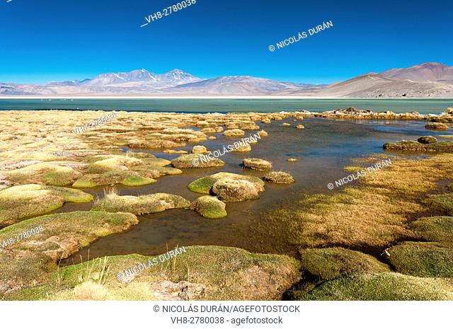 Santa Rosa Lagoon, Nevado Tres Cruces National Park, Region III of Atacama, Chile, South America