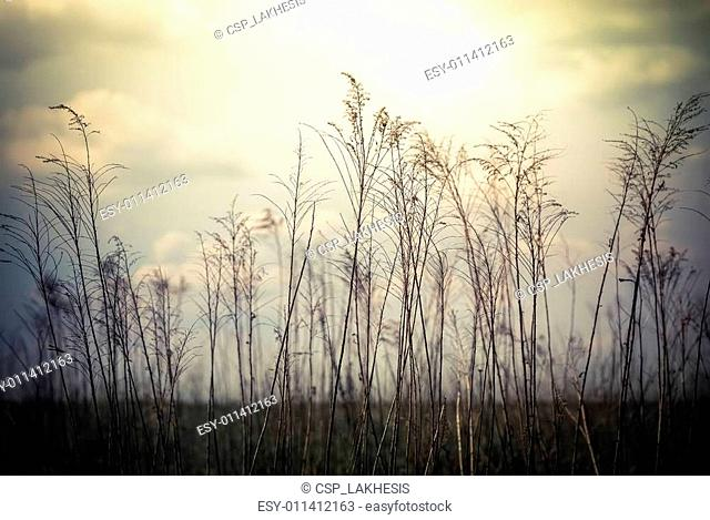 Abstract nature background with wild flowers and plants silhouet