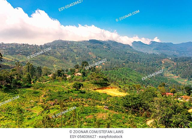 View to the Horten Plains with clouds in the montane forest in the central highlands of Sri Lanka