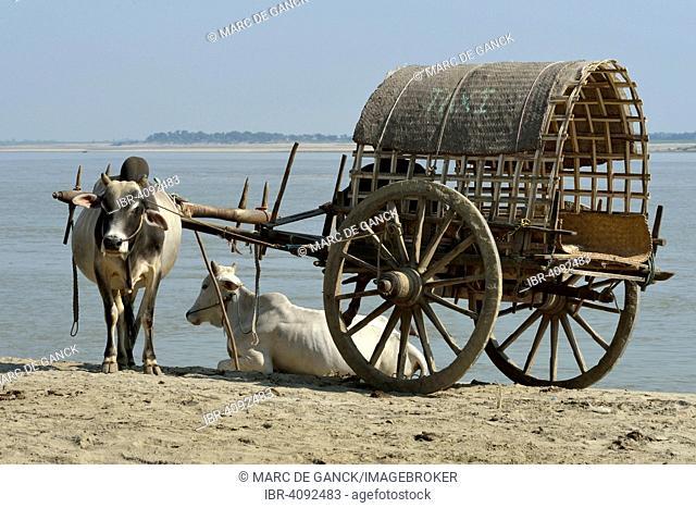 Farmer with ox cart, Mingun, Mandalay State, Myanmar