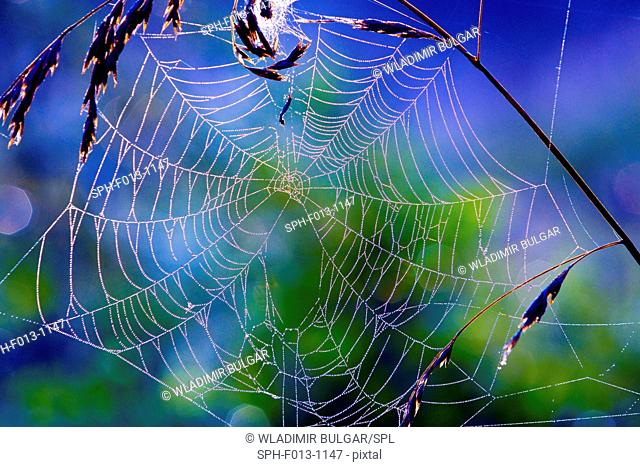Spider web, close up