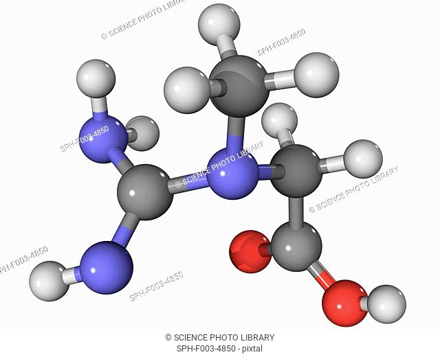 Creatine, molecular model. This amino acid acts as an energy store for the contraction of muscle. Atoms are represented as spheres and are colour-coded: carbon...