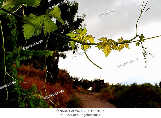 Nature and flora in Jerte Valley (Valle del Jerte), Caceres, Spain