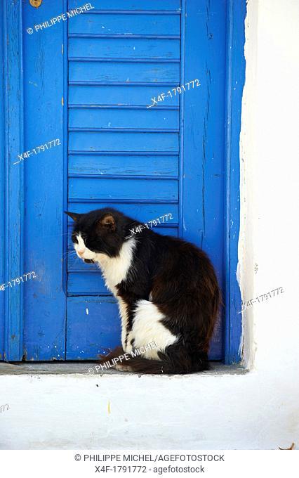 Greece, Cyclades, Mykonos, street cat