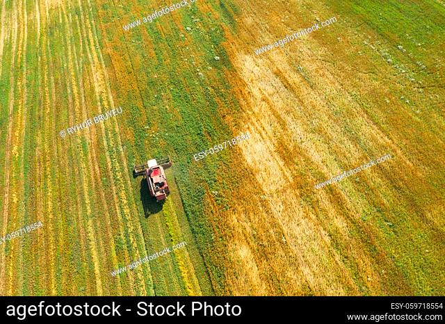 Aerial View Of Rural Landscape. Combine Harvester Working In Field, Collects Seeds. Harvesting Of Wheat In Late Summer. Agricultural Machine Collecting Golden...