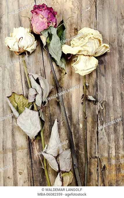 dried rose blossoms
