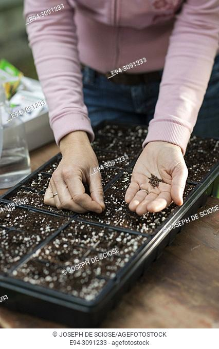 Partial view of a woman's hands planting seed in a seed tray