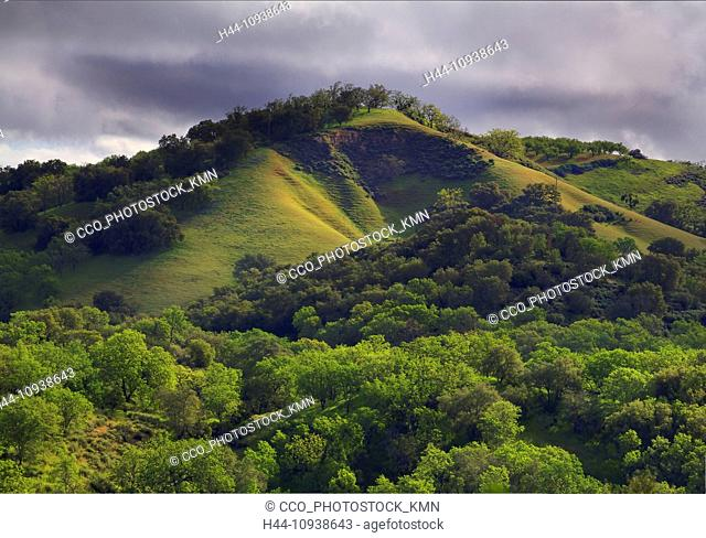 USA, United States, America, California, Paso Robles, Central california, Hill, Rolling Hills, green, trees