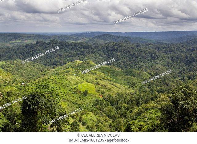 Indonesia, Sumatra Island, Aceh province, Bireun-Takengon road, Palm oil plantation
