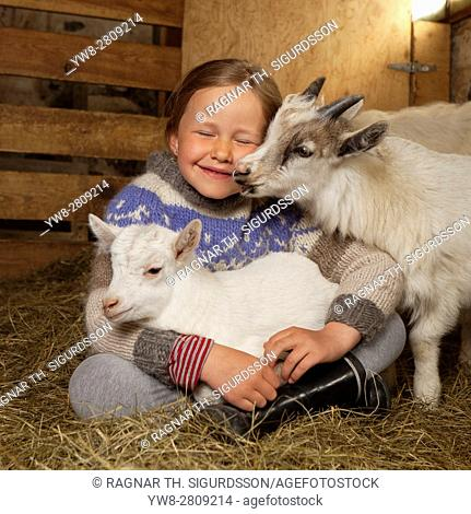 Young girl with kid goats, Goat farm, Western Iceland