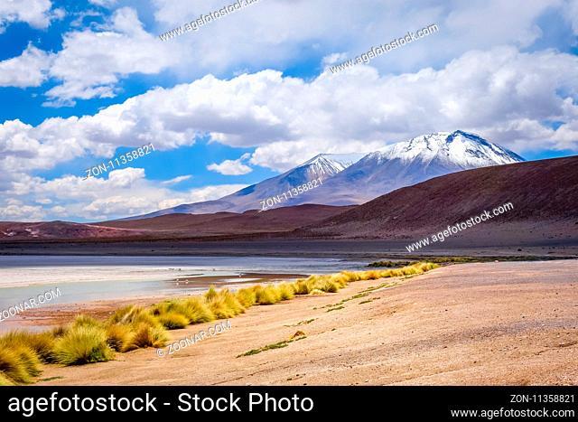 Laguna Honda in sud Lipez Altiplano reserva Eduardo Avaroa, Bolivia