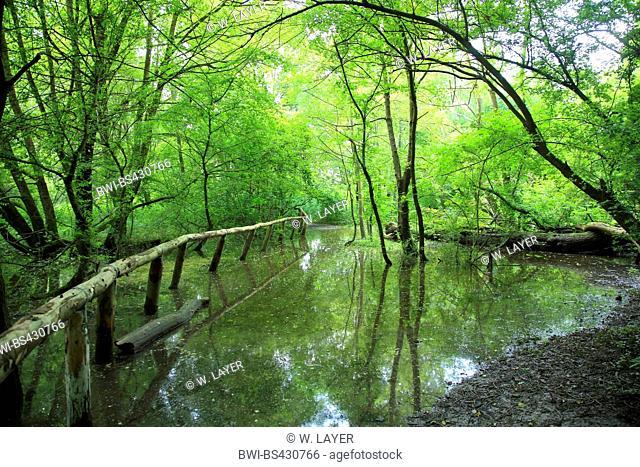 high water in floodplain forest in summer, Germany, Baden-Wuerttemberg