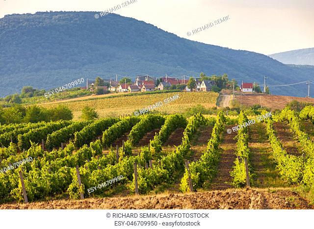 wine cellars, Bükkzsérc, Hungary