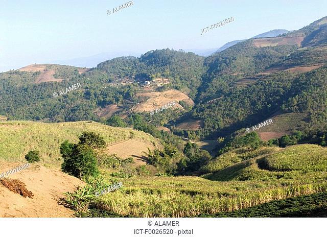 China, Yunnan, between Menghai and Lancang, tea plantation