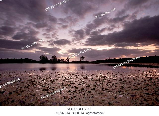 Cape water lilies, Nymphaea caerulea, in pond at dusk. Casino, New South Wales, Australia. (Photo by: Auscape/UIG)