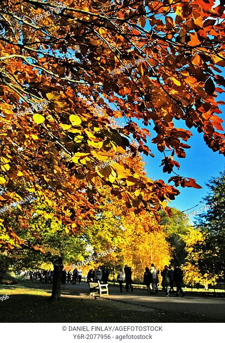 Autumn / Fall in St. James's Park in the heart of London, on a sunny day in England
