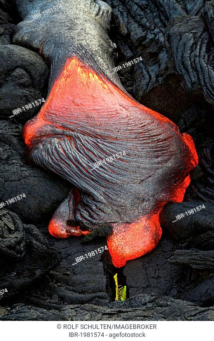 Viscous Pahoehoe lava flowing from rifts in the East Rift Zone towards the sea, lava field at the Kilauea shield volcano, Volcanoes National Park, Kalapana