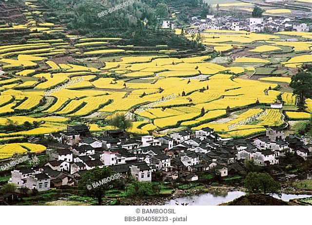 Elevated view of fields and Jiangling Village, Wuyuan County, Jiangxi Province of People's Republic of China