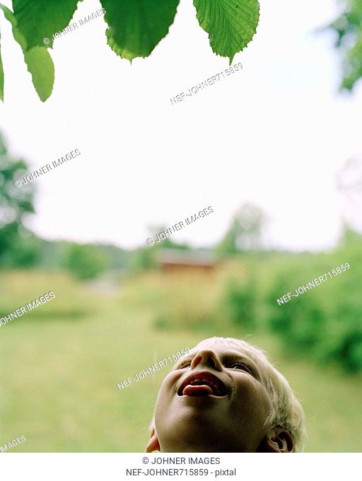 A child tasting the raindrops from a tree, Sweden