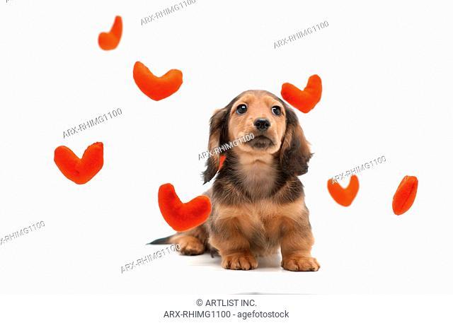 A puppy of love