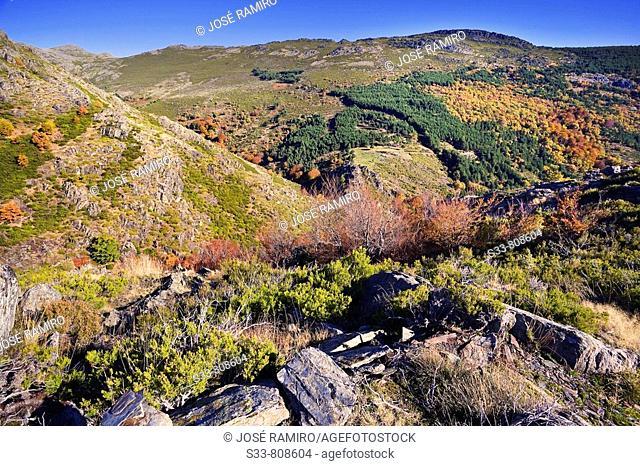 Loma de Calamorro. Sierra Norte. Provincia de Guadalajara. Castile-La Mancha, Spain