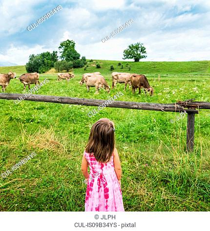 Real view of girl looking at cows grazing in field, Fuessen, Bavaria, Germany
