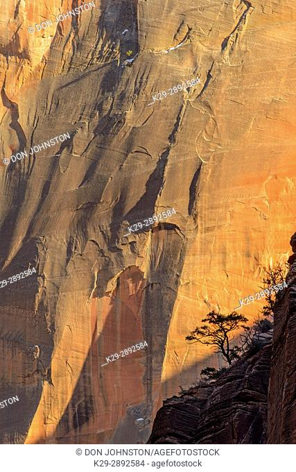 Zion Canyon walls with trees, Zion National Park, Utah, USA