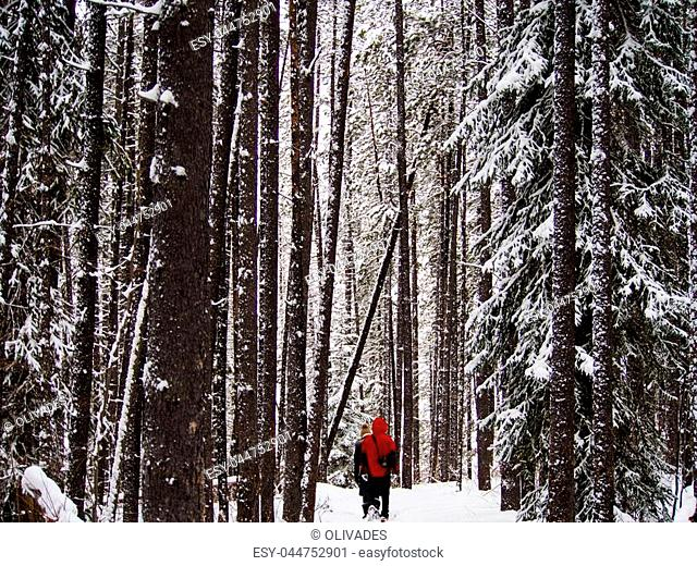 Man with red Coat walking through Sunwapta Falls Forest in Canada in Winter