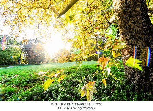 landscape garden Harrachpark in autumn, Austria, Lower Austria, Bruck an der Leitha