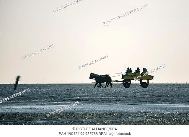 20 April 2019, Lower Saxony, Cuxhaven: At low tide a carriage with several people is pulled by two horses from Cuxhaven through the Wadden Sea to the island...