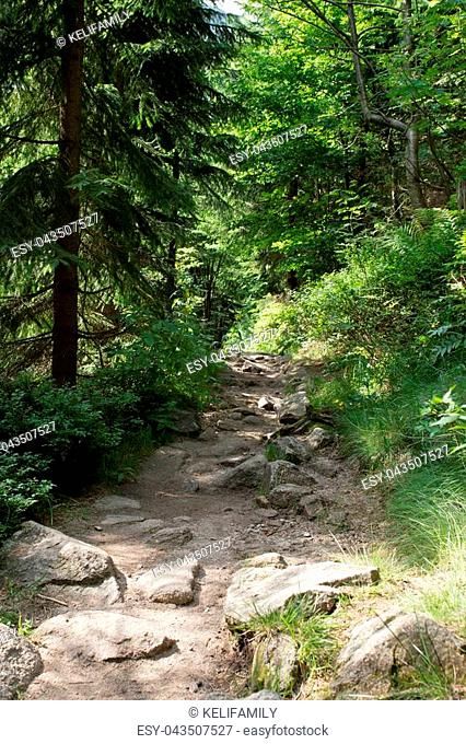 Rocky path in summer in the National park Krkonose Giant mountains, Czech Republic