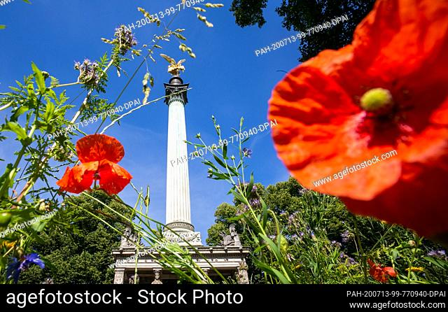 13 July 2020, Bavaria, Munich: Through a flower meadow with red corn poppy, the leaf-gilded bronze cast statue of the angel of peace can be seen enthroned on a...