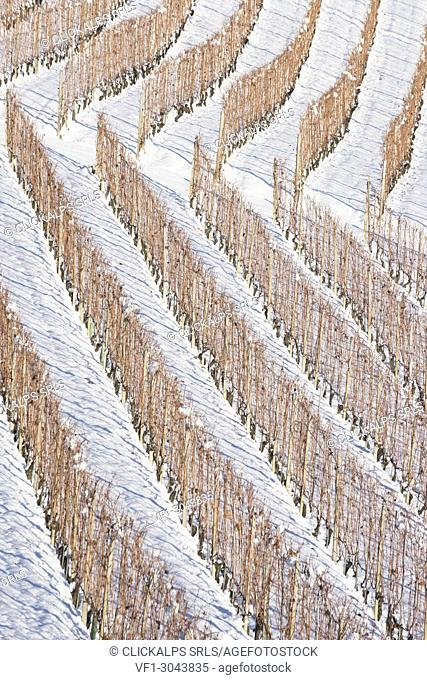 The wineyards in the winter, Barolo, Langhe, Cuneo Province, Piedmont, Italy, Europe