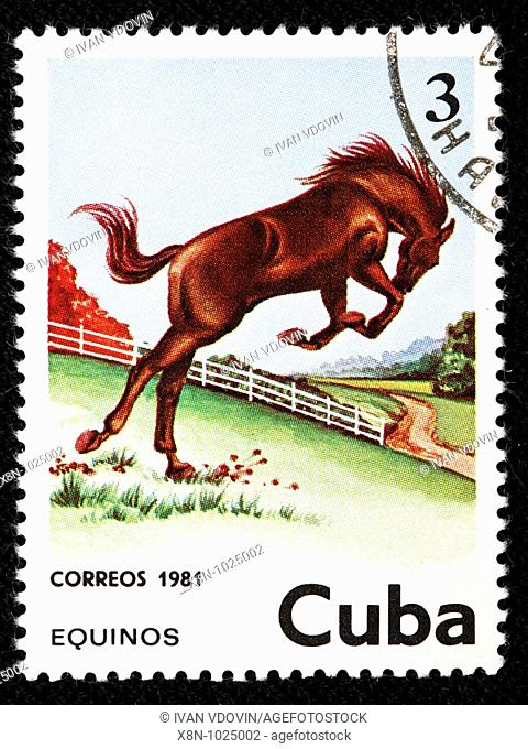Horse, postage stamp, Cuba, 1981
