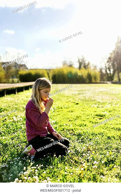 Little girl crouching on a meadow smelling daisy