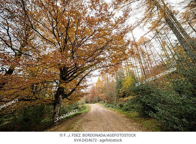 Sorogain forest area near of Burguete village, Navarre, Spain